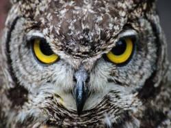 Интеллект и мудрость: в чем различие