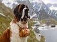 Собаки как вредители климата