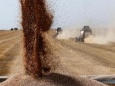 Россию спасет не нефть, а русская пшеница