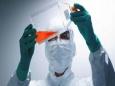 Из-за разработки вакцины может возникнуть нехватка обезьян