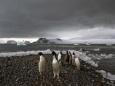 200 лет люди методично уничтожают Антарктику