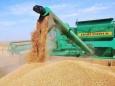 Импортеры российского зерна стали жаловаться из-за пестицидов и ГМО