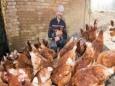 Теперь в аренду в Германии можно взять даже курицу-несушку
