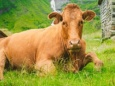 USDA признал молочный кризис в США