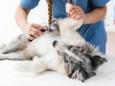 Пять советов как сохранить здоровье вашей собаке