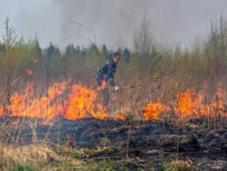 Регионы России снова страдают от лесных пожаров