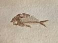 В египетской пустыне нашли окаменелости древних рыб, обитавших в горячих водах
