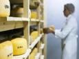 Кто  виноват в том, что продукцию российских сыроделов не покупают?