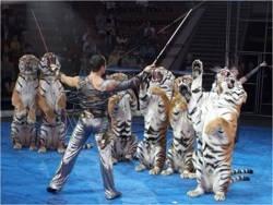 Не доводите «тигров» до крайности
